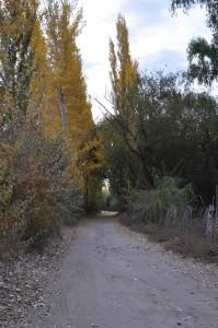 Barrio Villa Obrera, camino al río Neuquén.
